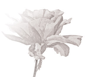 Flower Detail - Exhibitions | Graham Davis Paintings